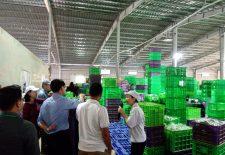 HBA – Vingroup: Hành trình tương lai xanh